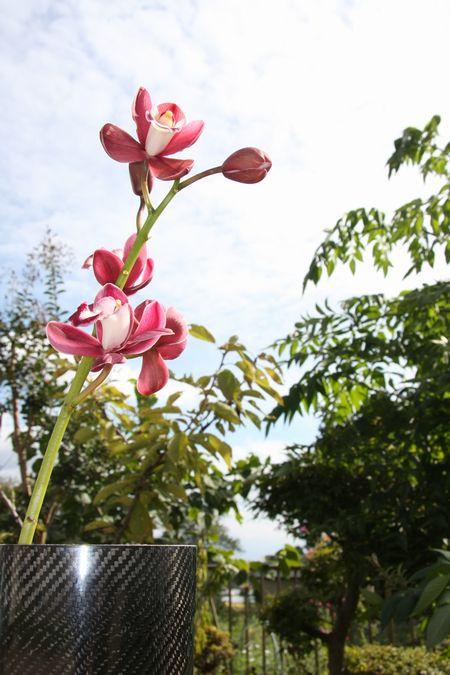 羽衣洋蘭園さんの蘭とドライカーボン花瓶